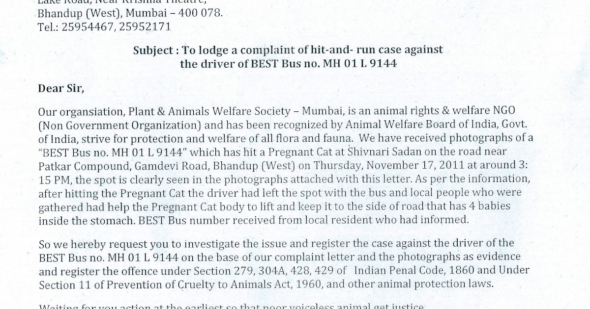 Paws mumbai press kit update paws mumbai sends a written paws mumbai press kit update paws mumbai sends a written complaint to bhandup police station against hit a pregnant cat and run case spiritdancerdesigns Image collections