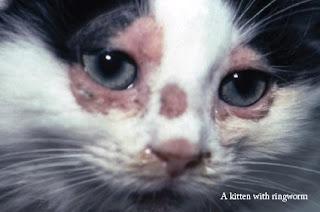 Kačiukas, sergantis grybeliu