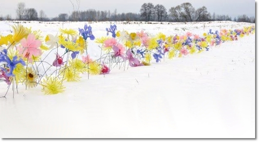 design snow, ulrich stelzer, blommor snö, flowers snow