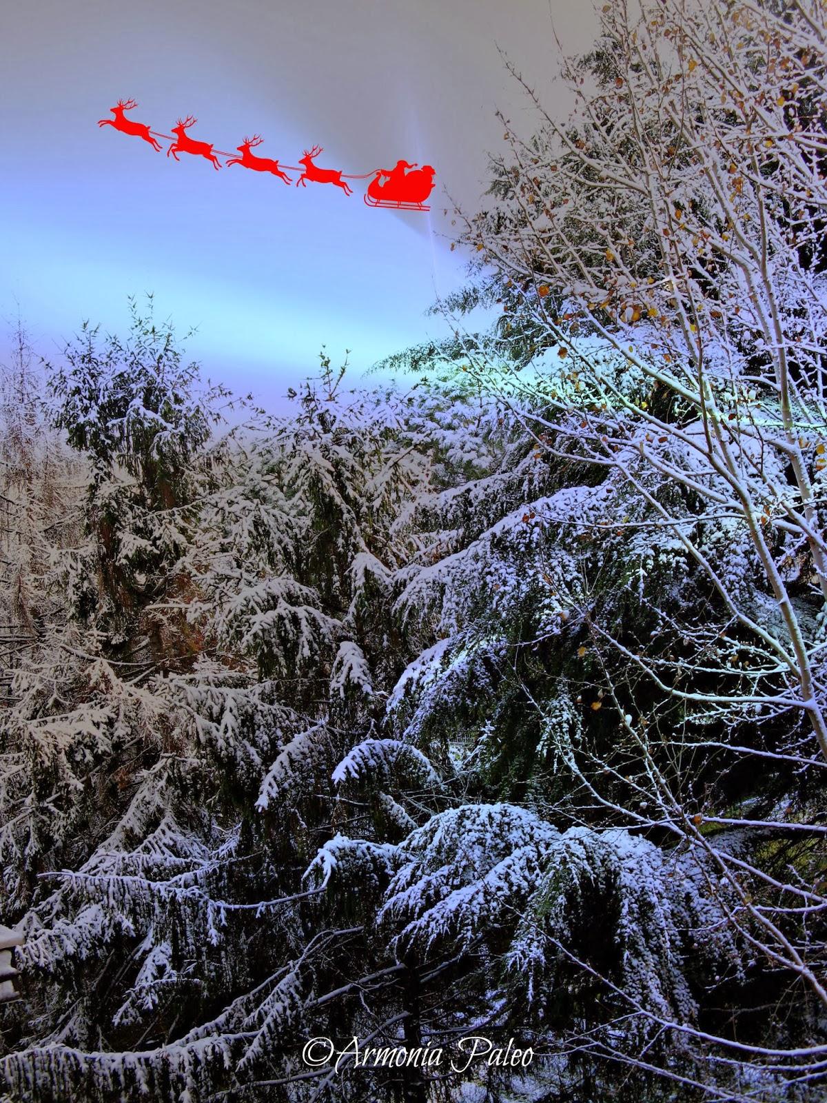 Proposte Menù di Natale 2013 di Armonia Paleo