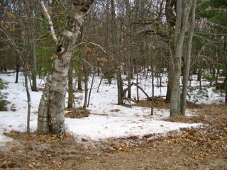 photo of woods full of snow cover