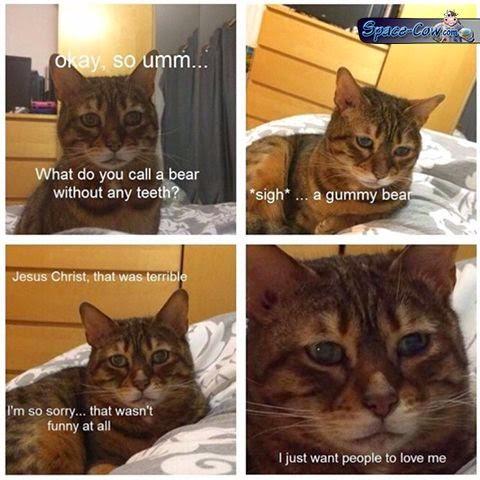funny bad joke cat