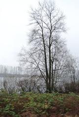 Mist on the Fraser 02/13