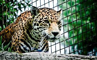 ملف كامل عن اجمل واروع الصور للحيوانات  المفترسة   حيوانات الغابة  1405111117_46b17ec49d