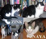 Zink e Naya (Aveiro)