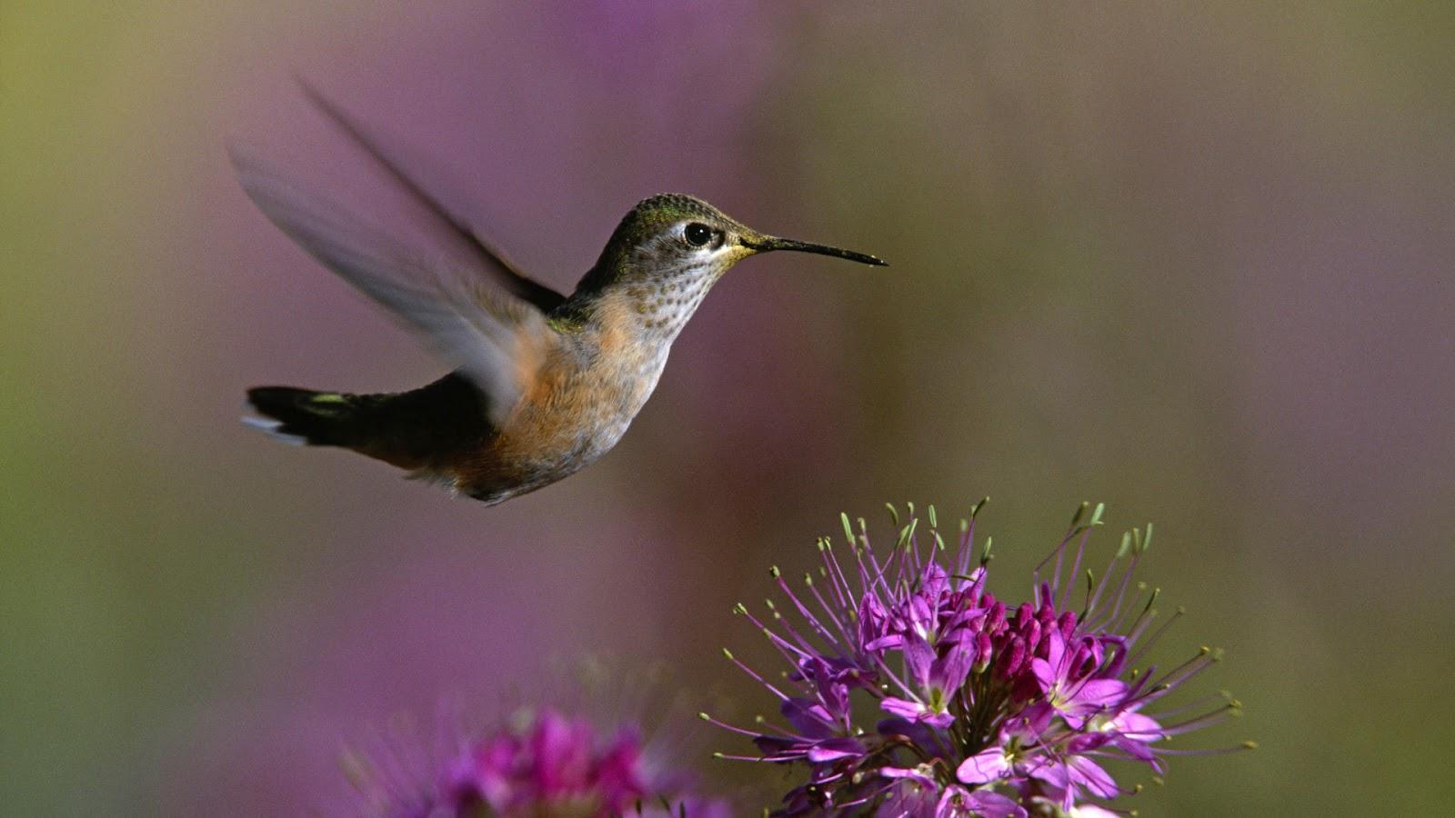 http://4.bp.blogspot.com/-rpTuIyAtaDc/T75yBCwHAxI/AAAAAAAAA2s/_r88mSIUld0/s1600/nature-flowers-bird-background-wallpaper-ajd-1920x1080.jpg