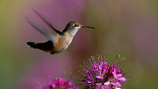 nature flowers bird background wallpaper ajd 1920x1080.jpg