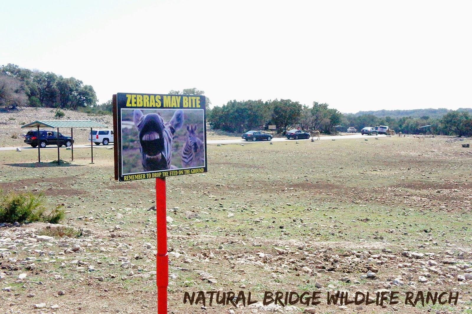 Zebras at the Natural Bridge Wildlife Ranch in San Antonio, Texas
