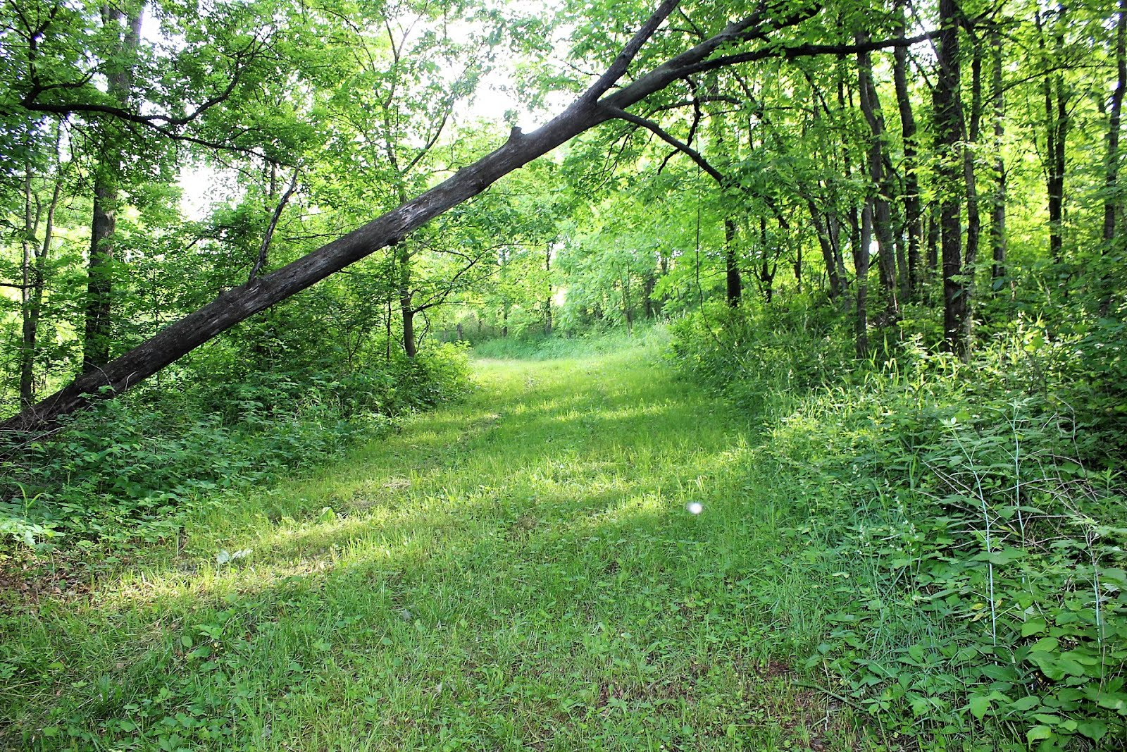 Timber, Trails, Recreational, CRP Income