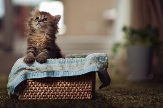 anak-kucing-cute