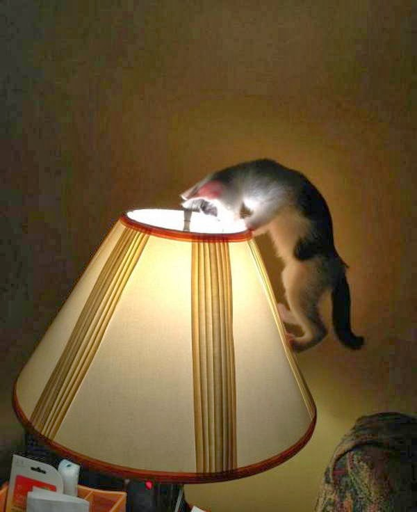 Funny cats - part 95 (40 pics + 10 gifs), cat pictures, cat investigates lamp