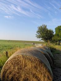 Heuernte in Ostfriesland