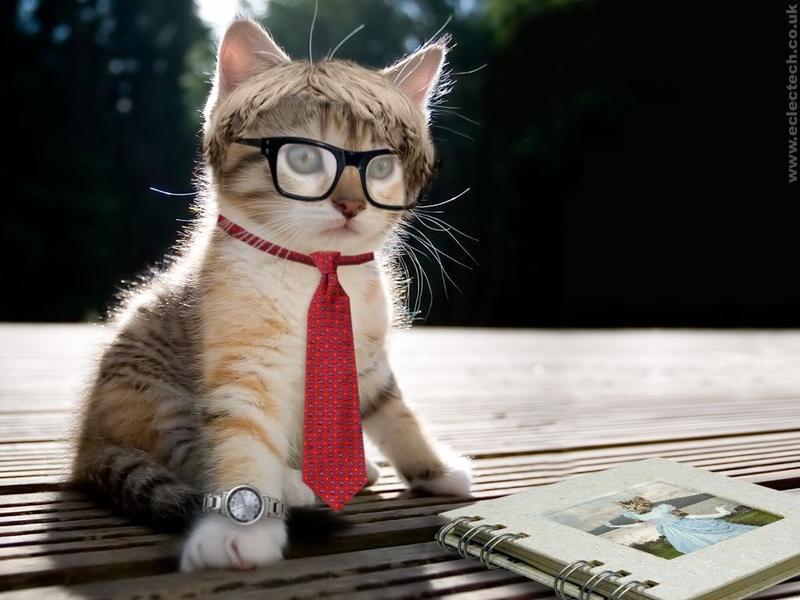 gambar hewan kucing - gambar kucing