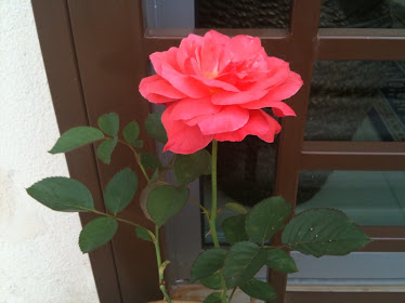 Bunga Favourite Mak