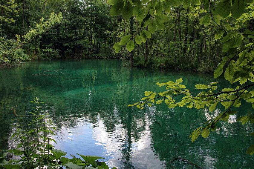 Lago de pouca profundidade rodeado de plantas, com água de cor turquesa