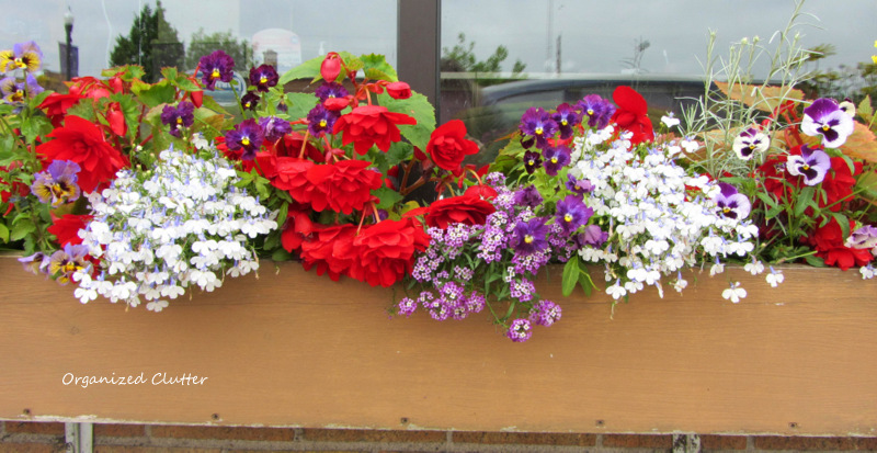 Trailing, Upright, Colorful Window Box Annuals www.organizedclutterqueen.blogspot.com