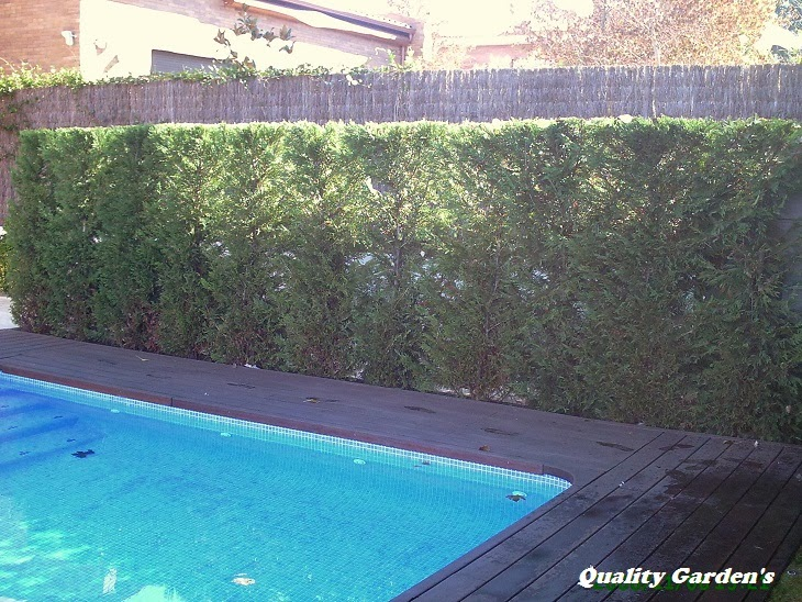 Quality Gardens Recorte De Vallas Y Arbustos - Arbustos-para-vallas