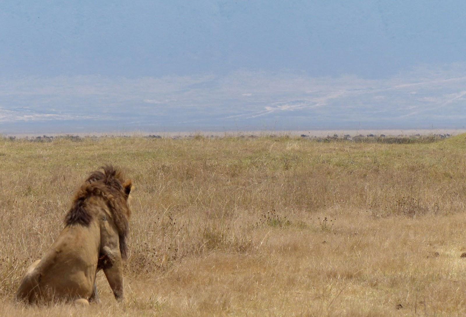 http://4.bp.blogspot.com/-rr0Glc_MpHA/UirzqgTqlhI/AAAAAAAACUg/Q5y317ZMjLc/s1600/lion+back+2.jpg
