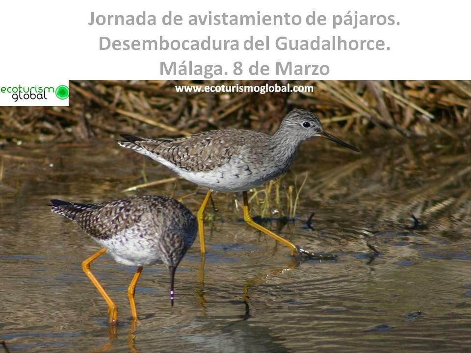 http://ecoturismoglobal.com/desembocadura_guadalhorce