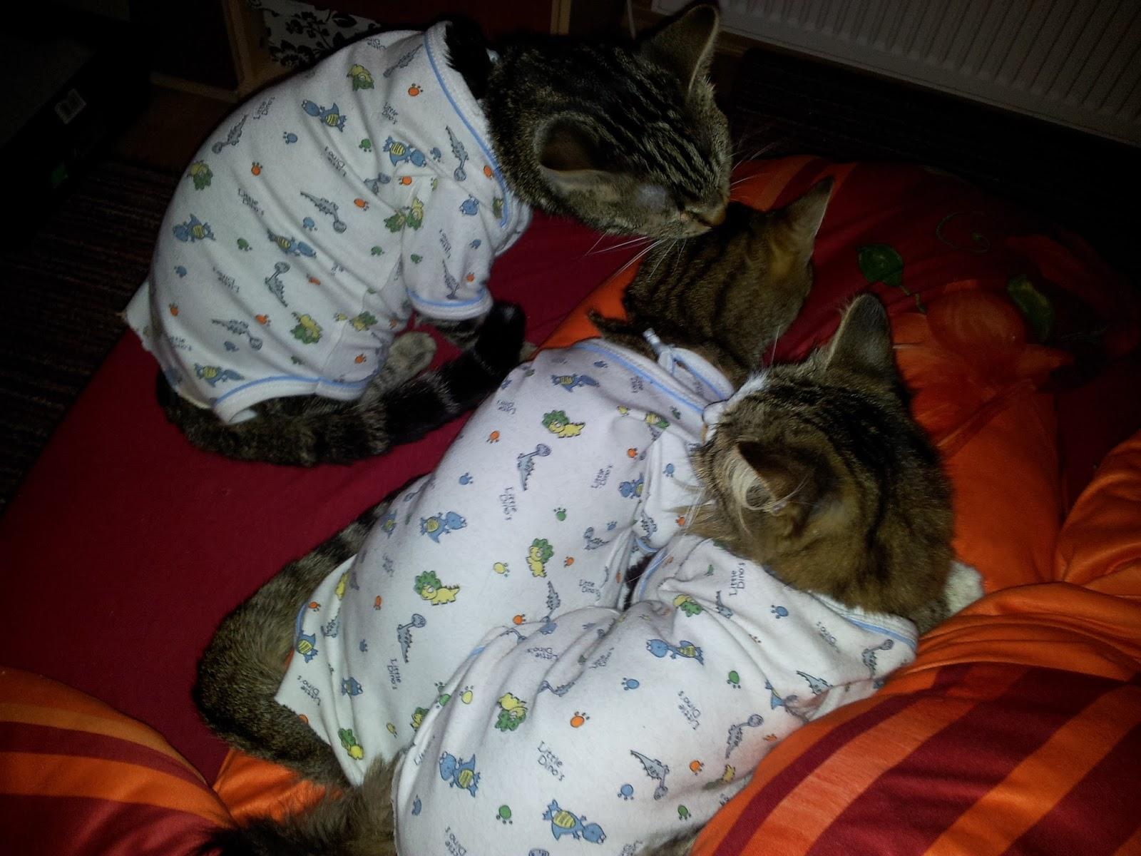 appetitanreger katzen homöopathisch