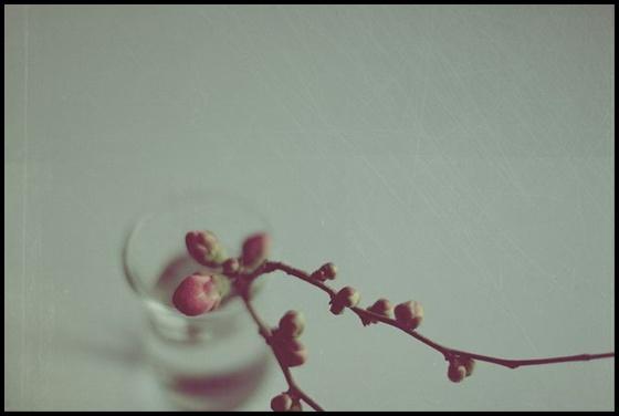 blog de imagens
