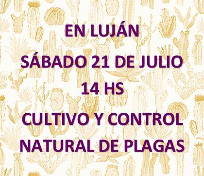 CULTIVO Y CONTROL NATURAL DE PLAGAS EN CACTUS Y SUCULENTAS NC TOCANDO LA FOTO TODA LA INFORMACIÓN