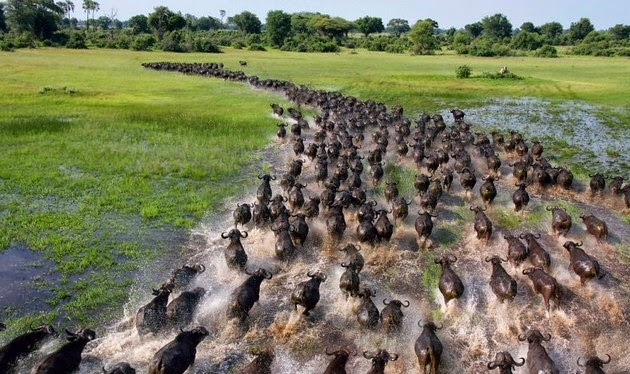 animal migration photos-8