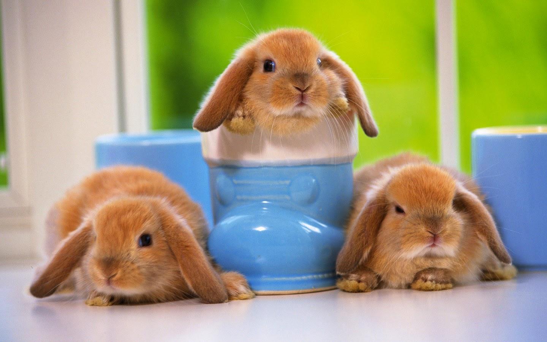 Papa Francisco: Para ser buen católico no hay que tener hijos como conejos