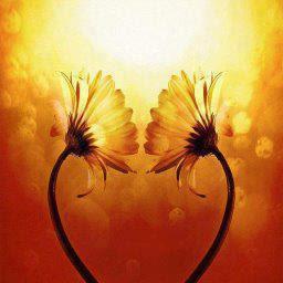 girasoles de amor