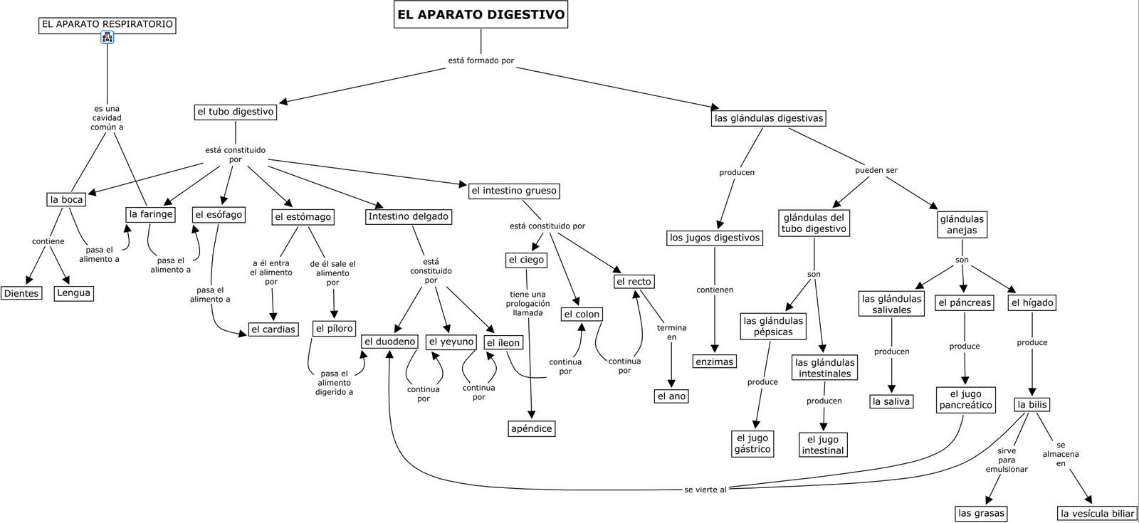 Increíble Diagrama No Marcado Del Sistema Digestivo Cresta ...