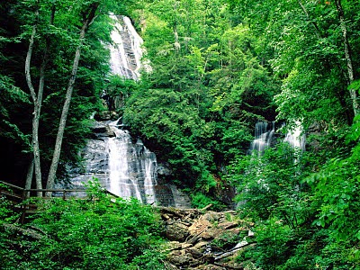10 Negara yang Memiliki Hutan Terluas