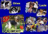 Unvergessen Lucie, Chiwa, Tinca und Calimero !