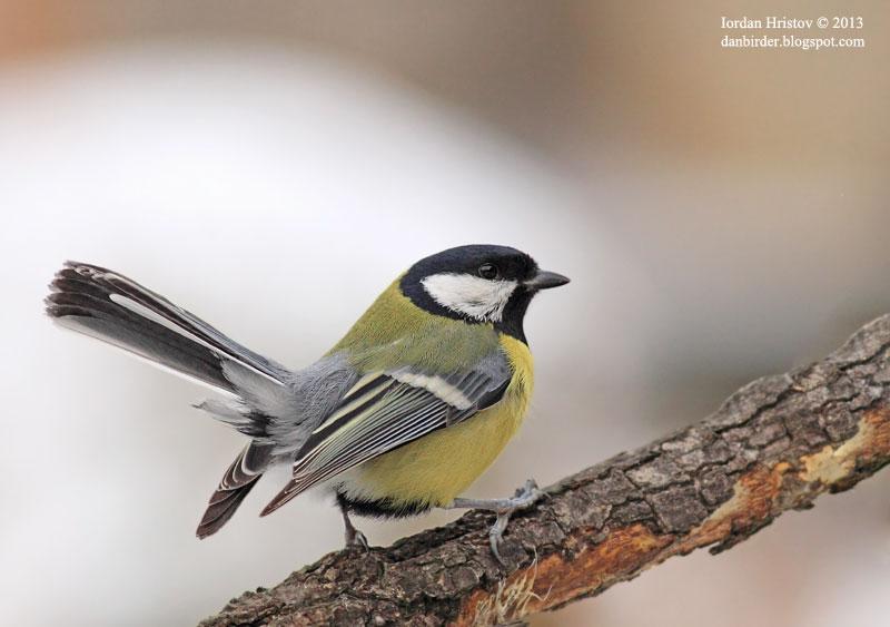 bird hide photography
