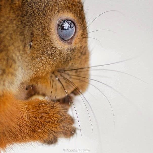 wildlife photography feeding animals konsta  punkka-5