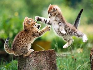 Imágenes Graciosas de Animales, Gatos