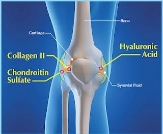 kenapa perlunya collagen, pure marine collagen, zarraz collagen, kenapa perlunya collagen