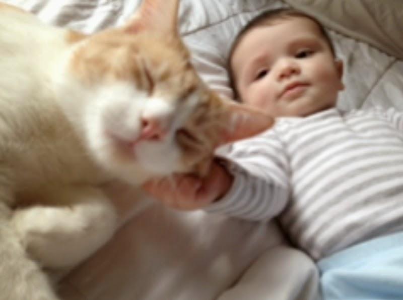 Foto bayi lucu bermain dengan kucing gratis gambar