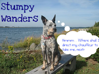 Stumpy Wanders