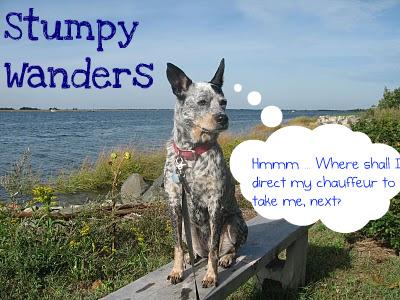 Stumpy Wanders