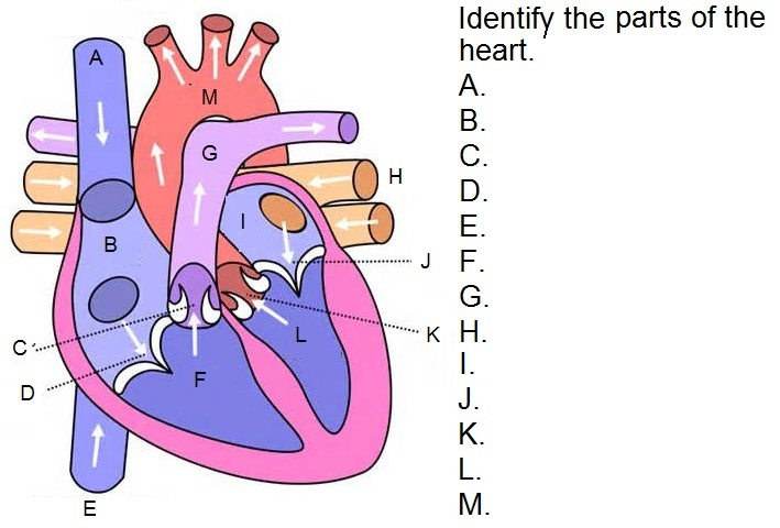 Telemetry Technician Course: Cardiac Anatomy Question (class 2 review)