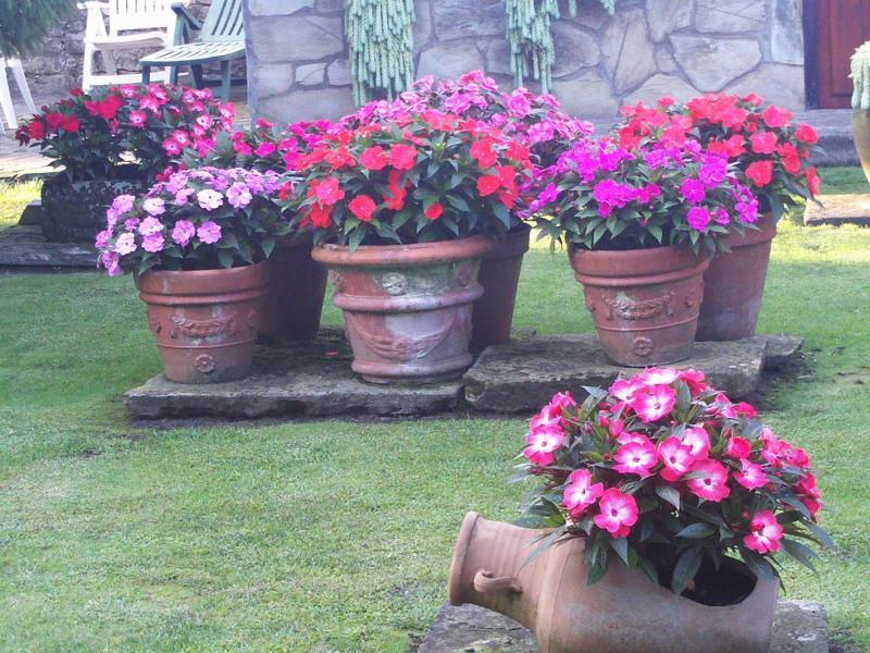 Flores masetas con flores - Macetas de jardin ...