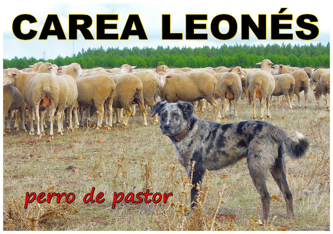 Carea Leons