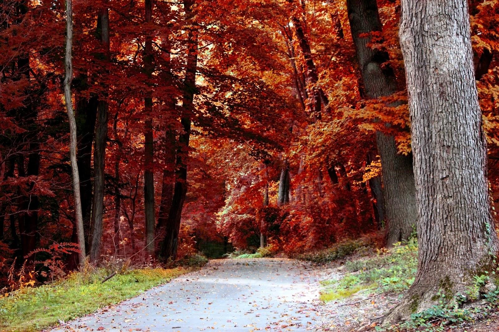 Las 4 estaciones : Antonio Vivaldi : El Otoño