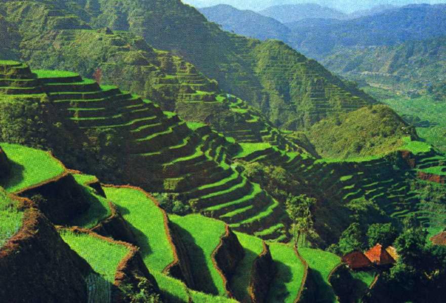 World beautifull places the rice terrace fields of banaue for Terrace nature