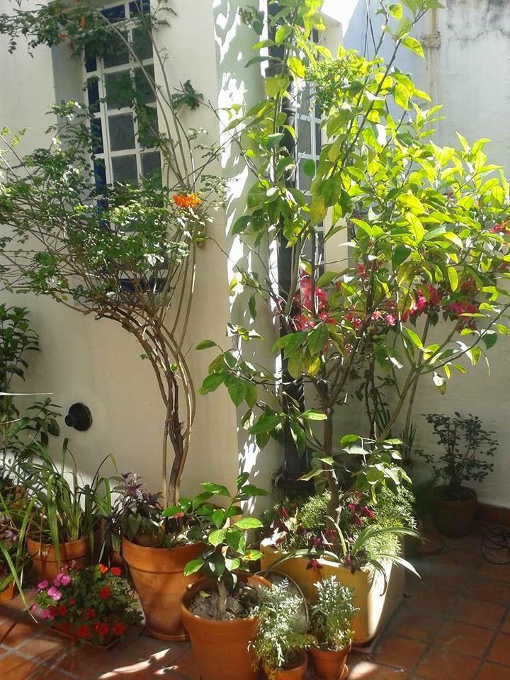 Octavio jardinero mantenimiento en terrazas y patios con - Patios con macetas ...