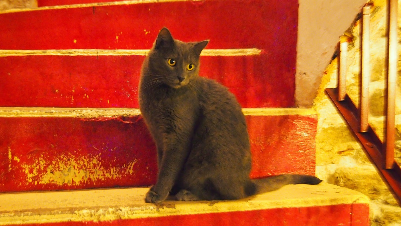 台湾猫カフェの猫の写真