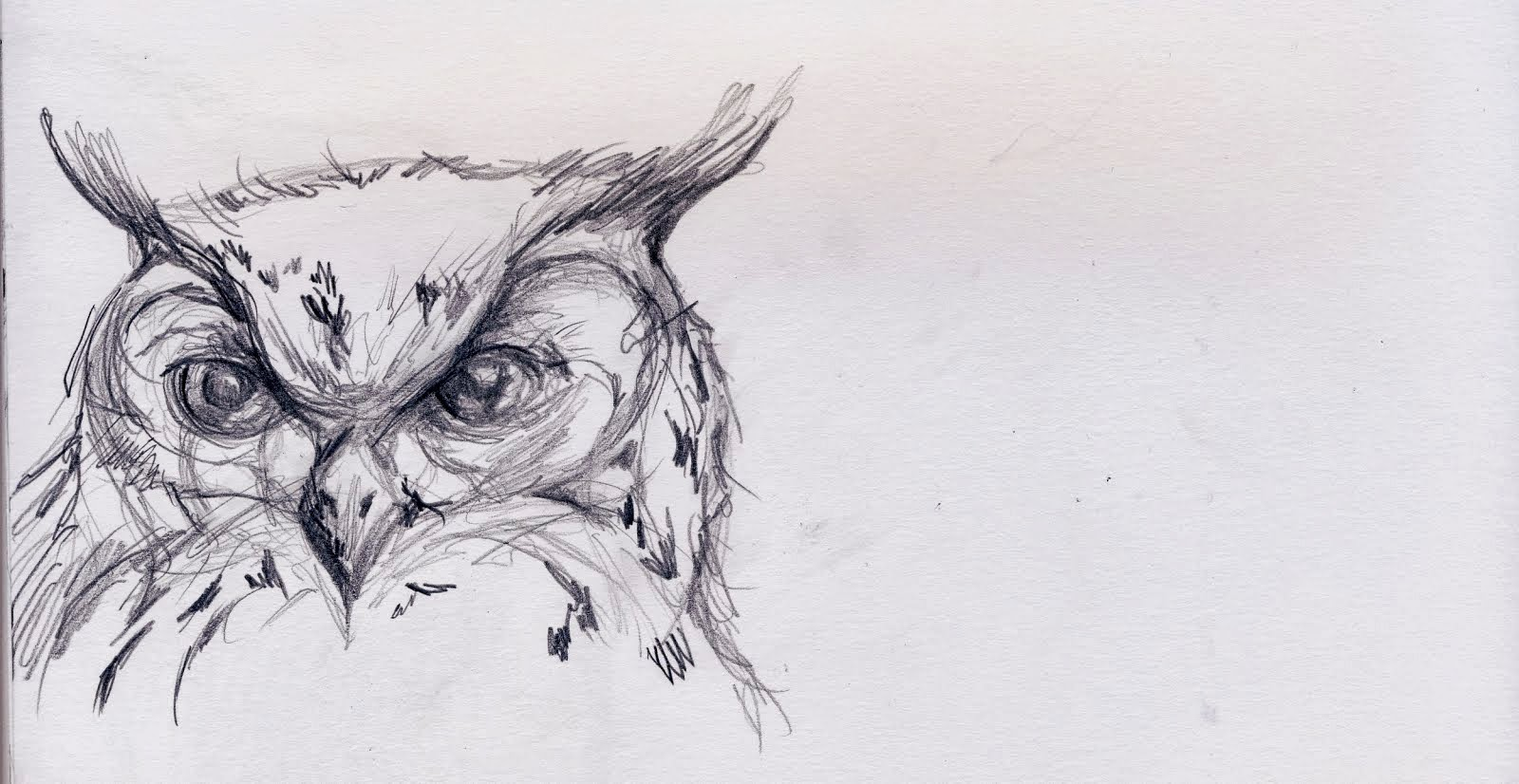 Owl sketch all about owl