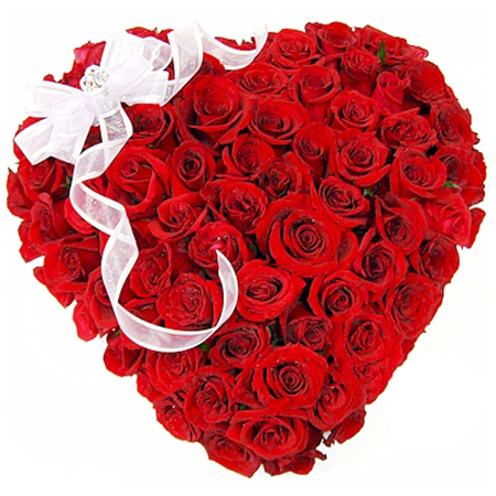 most beautiful red rose flowers in the world. most species are found in asia but it is generally well distributed all over the world roses considered one of beautiful ornamental plants to red rose flowers