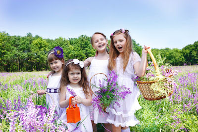Niñas recolectando flores de lavanda en el campo - Happy girls lavender fields flowers