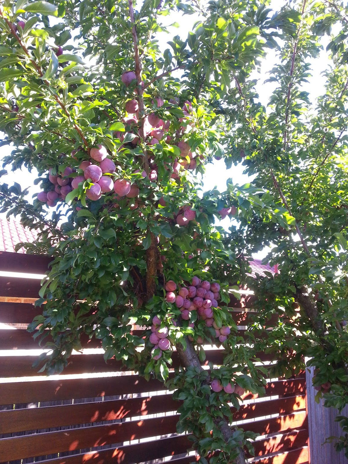 Time to cook the plums